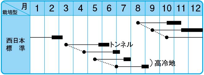 与作大根の栽培型