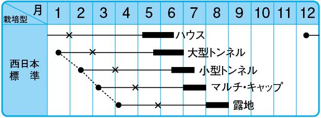 虎太郎西瓜の栽培型