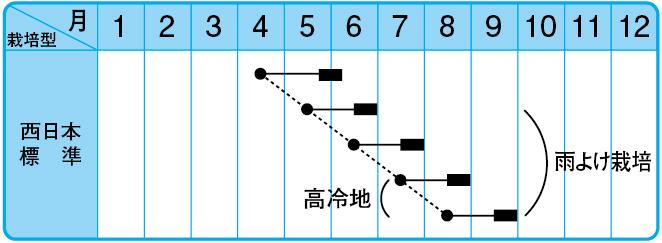 サマートップ法蓮草の栽培型