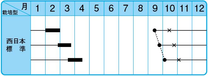 四川児菜(子持タカナ)の栽培型