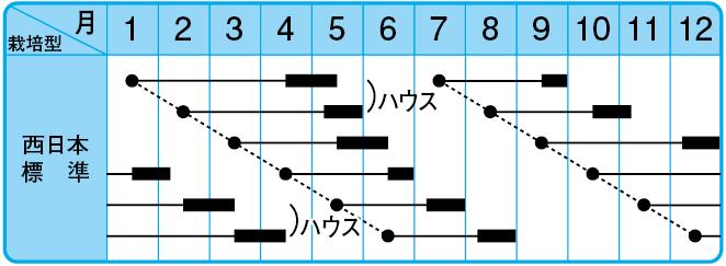 博多くろねぎ(夏用)の栽培型